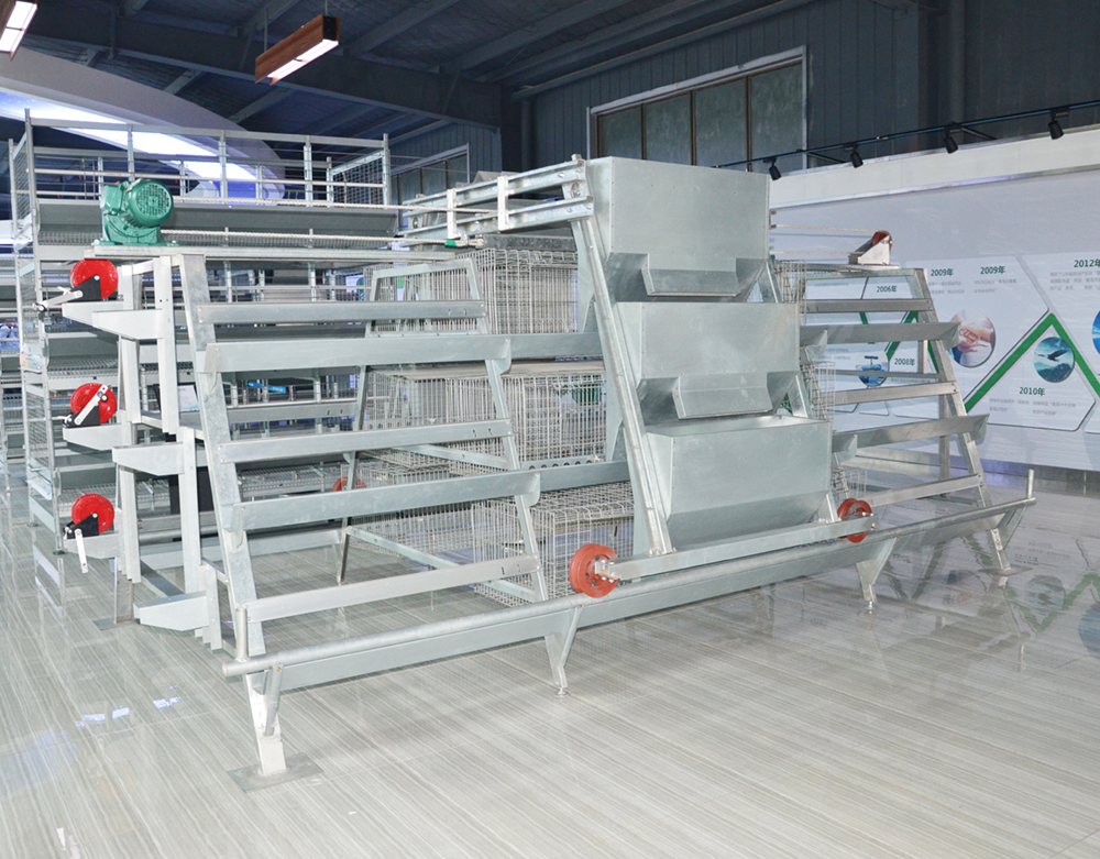 A-Type-Pullet-Chicken-Cage