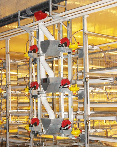 auto-Broiler-feed-2